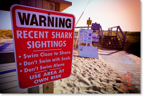 Great White Shark Cape Cod. Recent shark sightings on Nauset Beach in Orleans.
