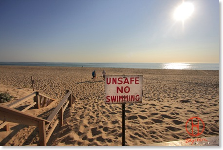 Nauset Beach Great White Shark. Nauset beach shark, unsafe no swimming.