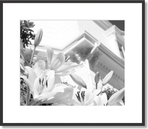 Black and White Flowers Framed Art Print