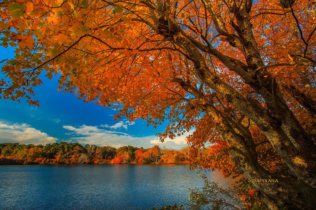 Fall Foliage in Eastham, Massachusetts Today | Amazingly Beautiful Nature And Travel Photography Of Cape Cod National Seashore