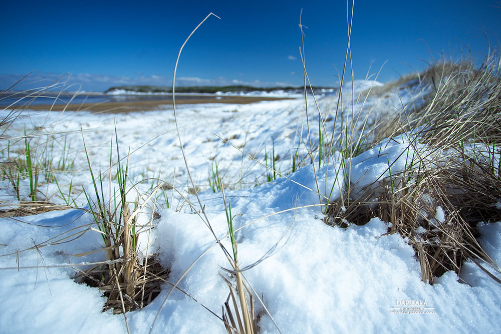 Unexpected Winter Weather On Great Island In Wellfleet Blog