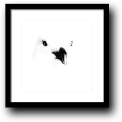 Buy black and white seagull artwork from dapixara.com